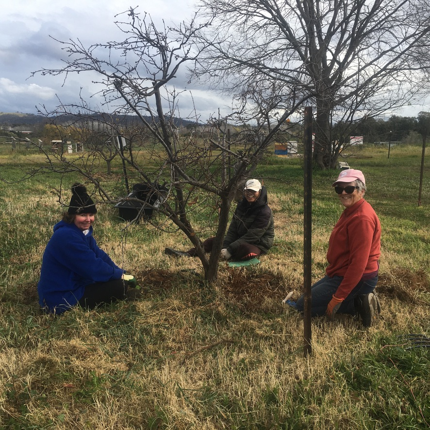 New Orchard Maintenance