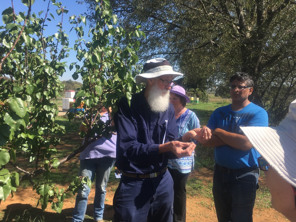 Autumn Tree Pruning Workshop March 2020